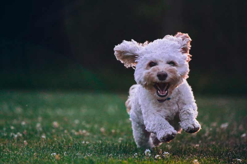 Happy Dog - Why a dog can help improve your mood and mental health