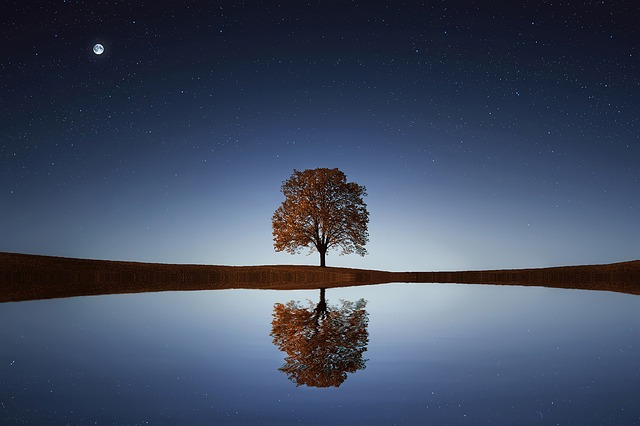 Dont compare you life to others , reflect and view yourself. a picture of a tree with a reflection below it